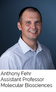 Anthony Fehr, Assistant Professor, Molecular Biosciences